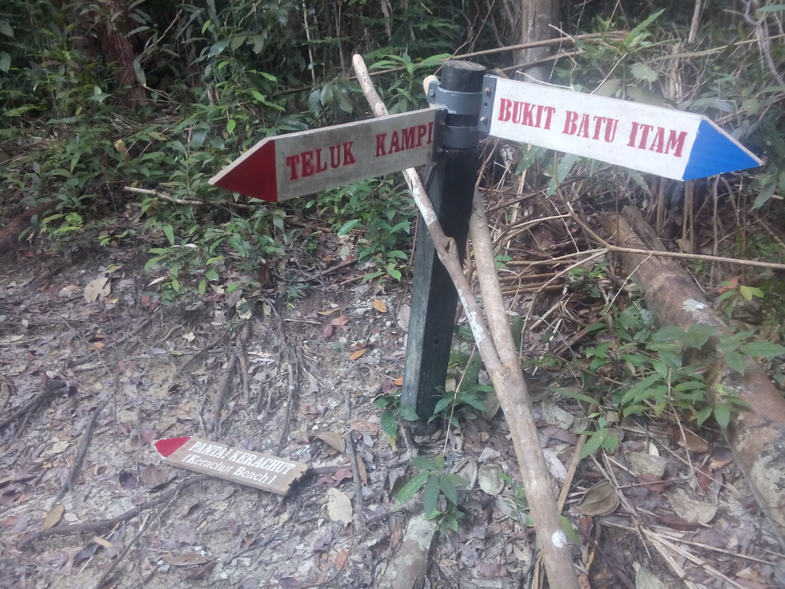 A broken signpost in the jungle