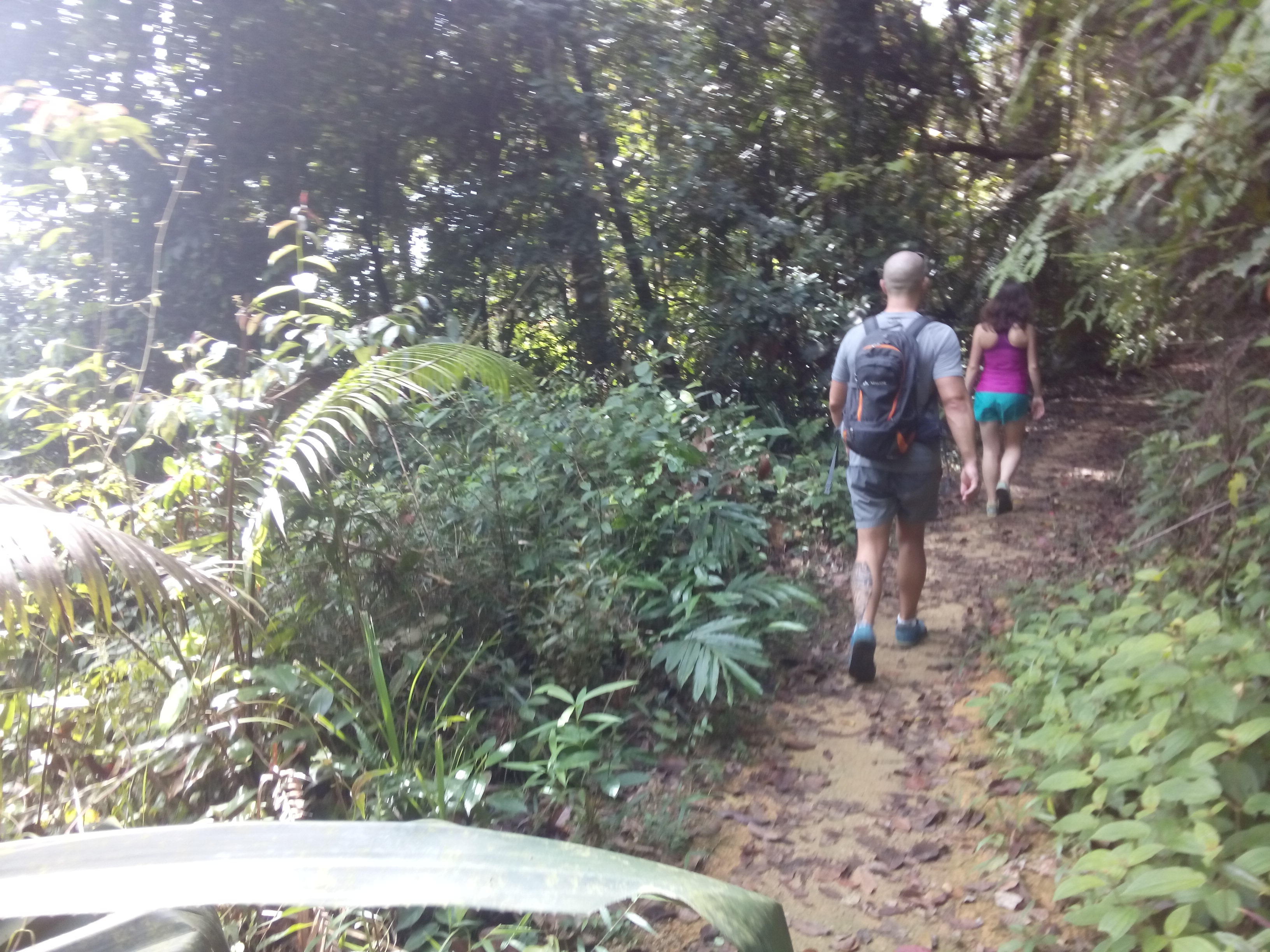 Two people on a leafy, jungle path