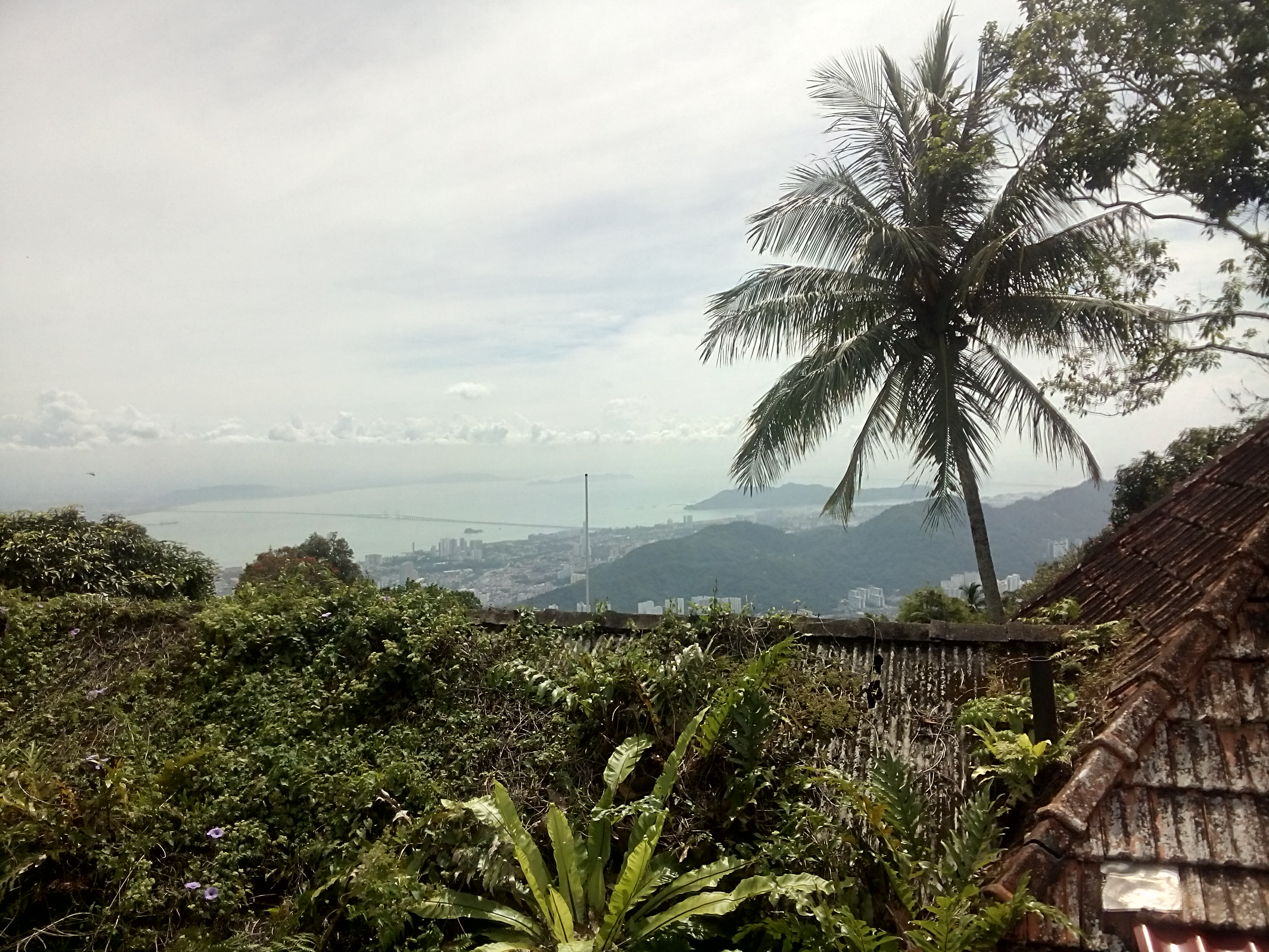 Palm tree in foreground and view of sea and distant hills and city