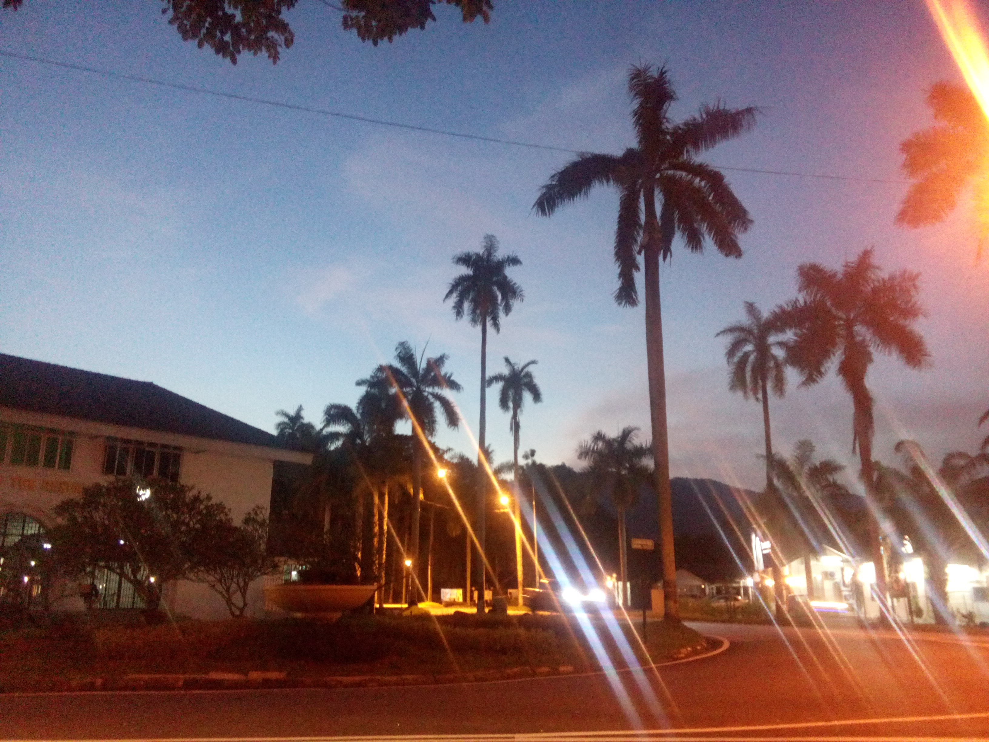 Dusky blue sky with pink clouds, palm trees and glowing streetlights