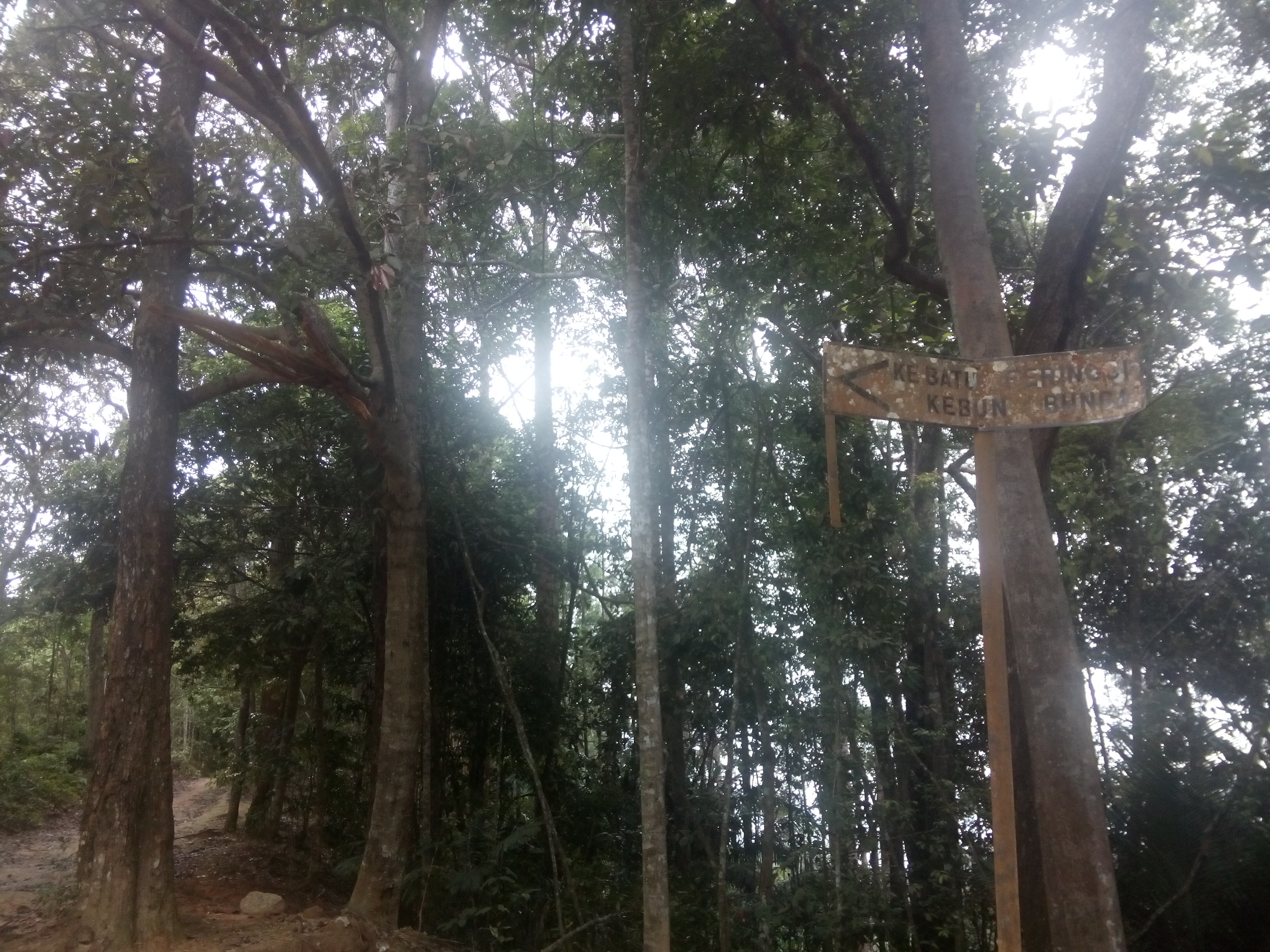 A metal sign on a wooden post with trees behind