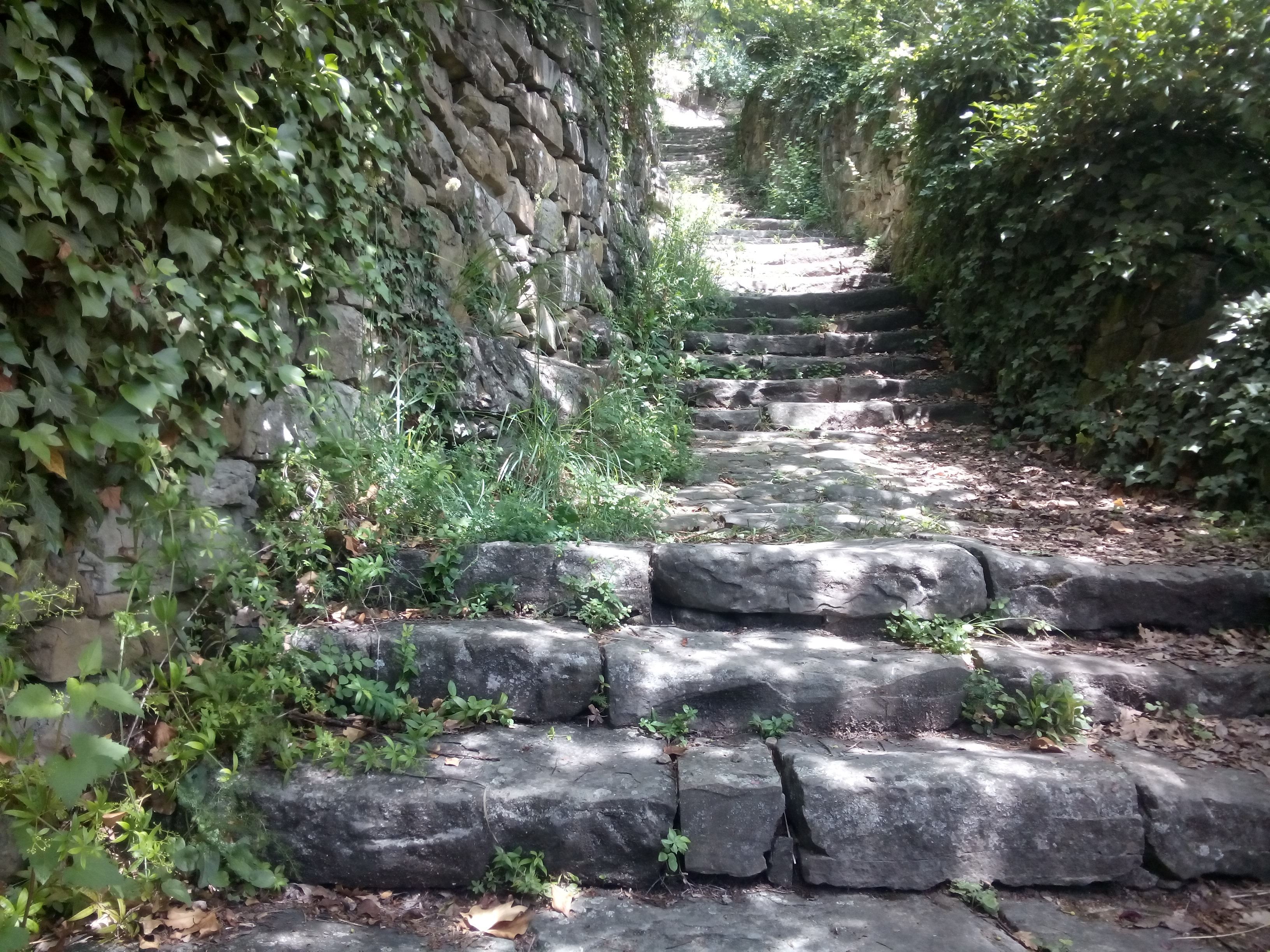 Stone steps with grass