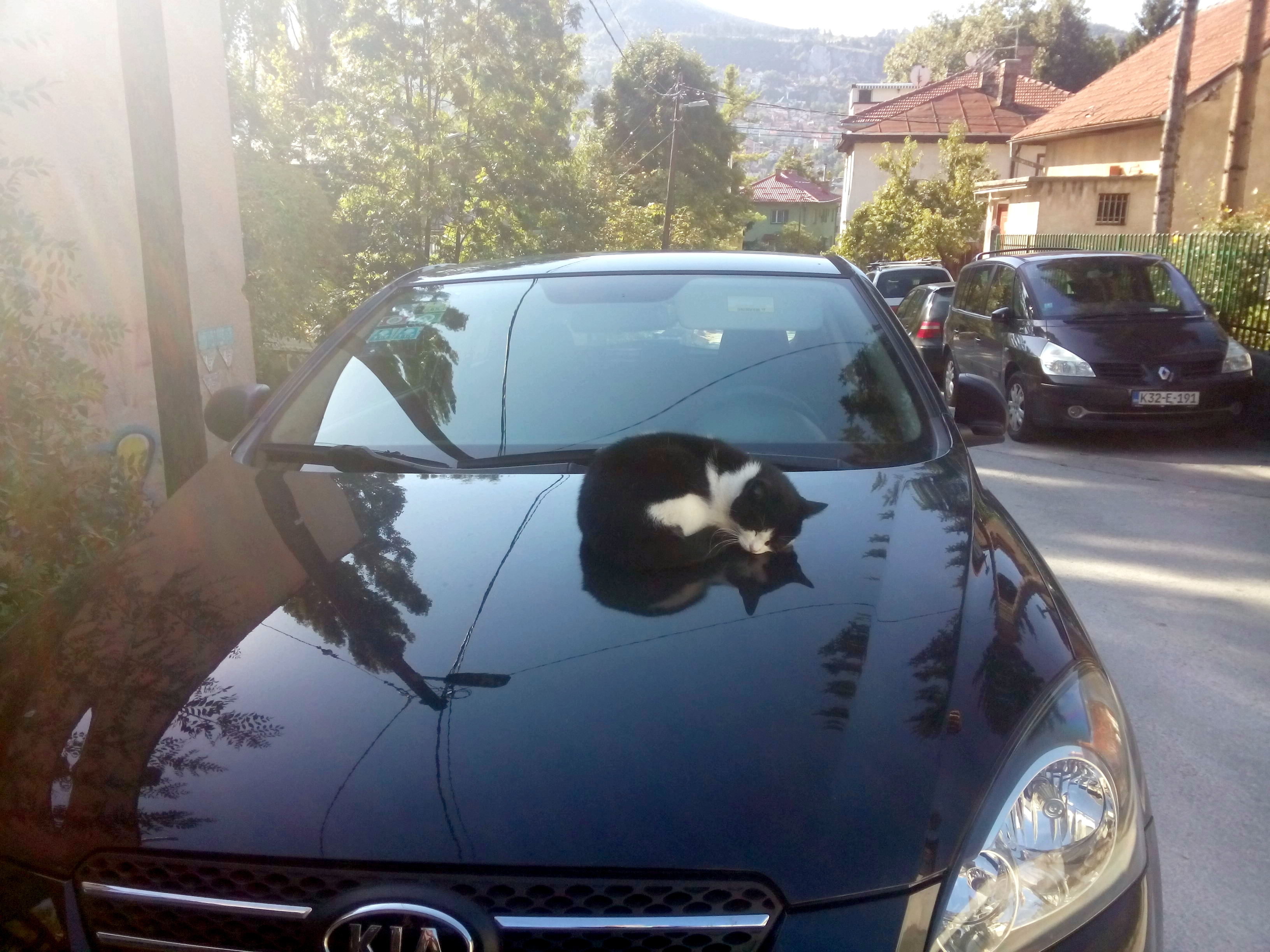 A cat curled up asleep on the bonnet of a black car, in the sun. Hillside in the background