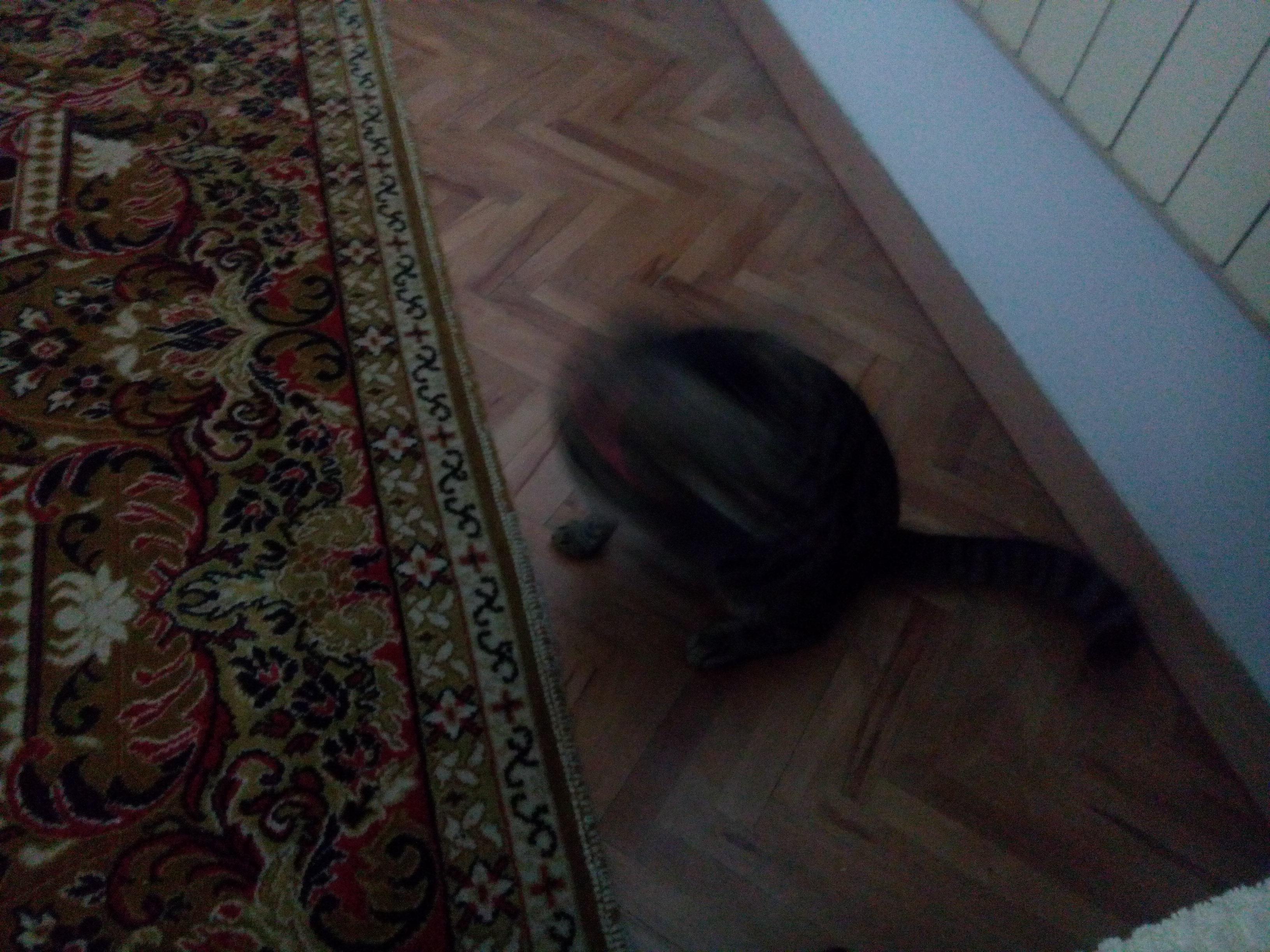 https://i.amy.gy/2017-sarajevo/IMG_20171005_172105.jpg