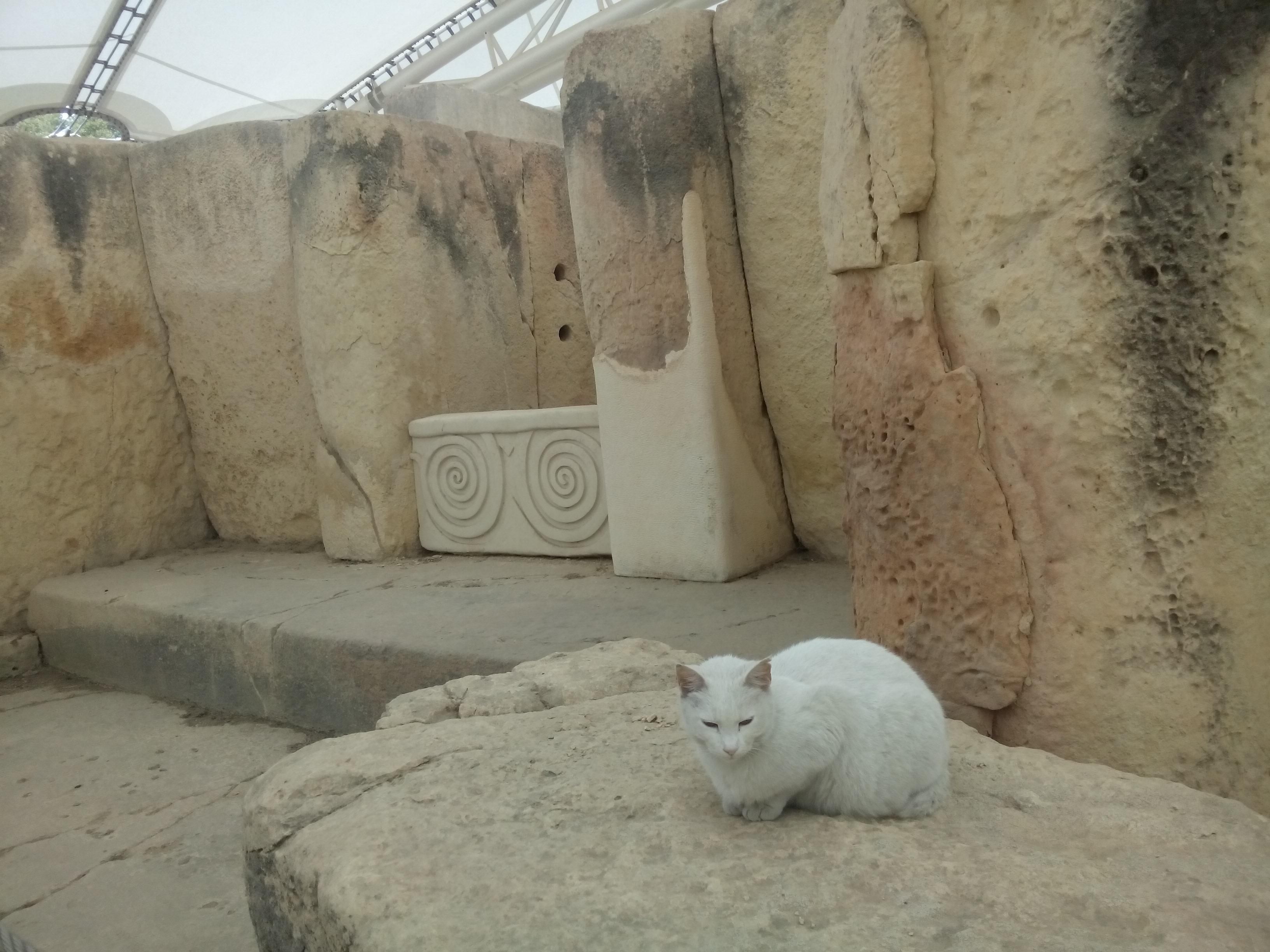 A scraggedy white cat sits amongs ancient sandstone temple ruins