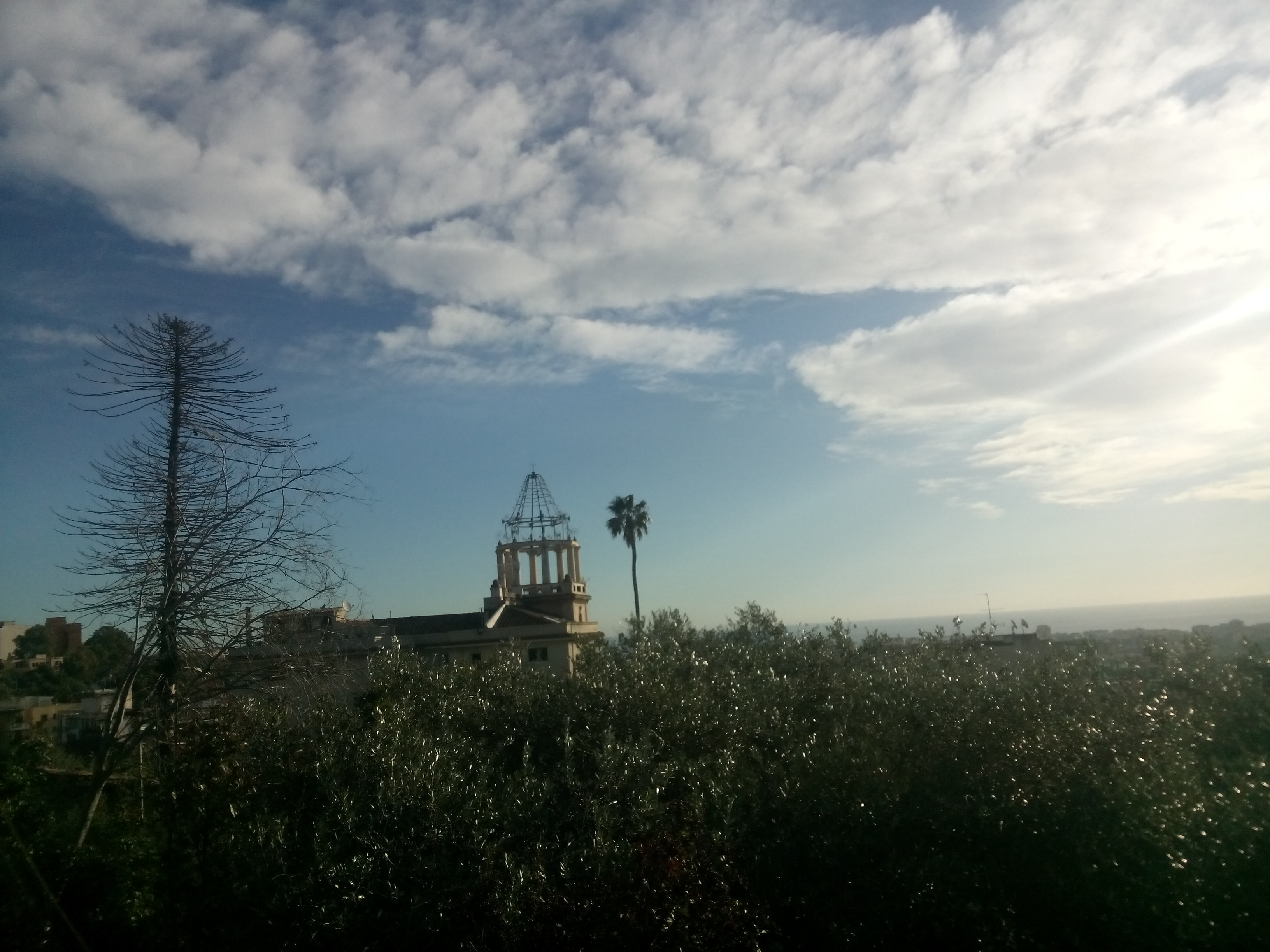 Blue sky with white clouds; green trees with a church and a palm tree sticking up in the center