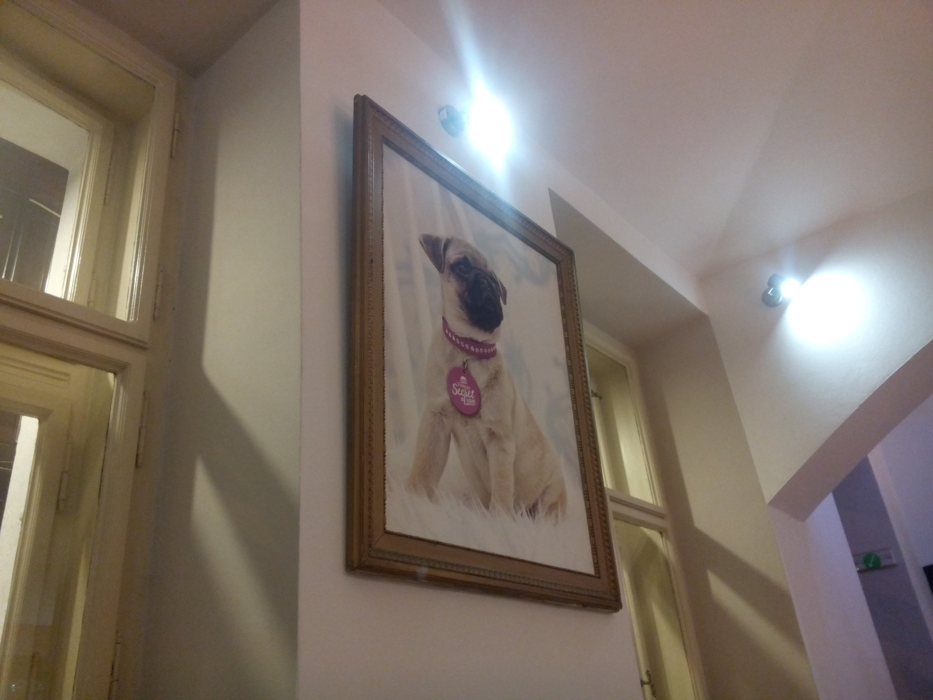 A framed picture of a regal looking pug wearing a pink collar