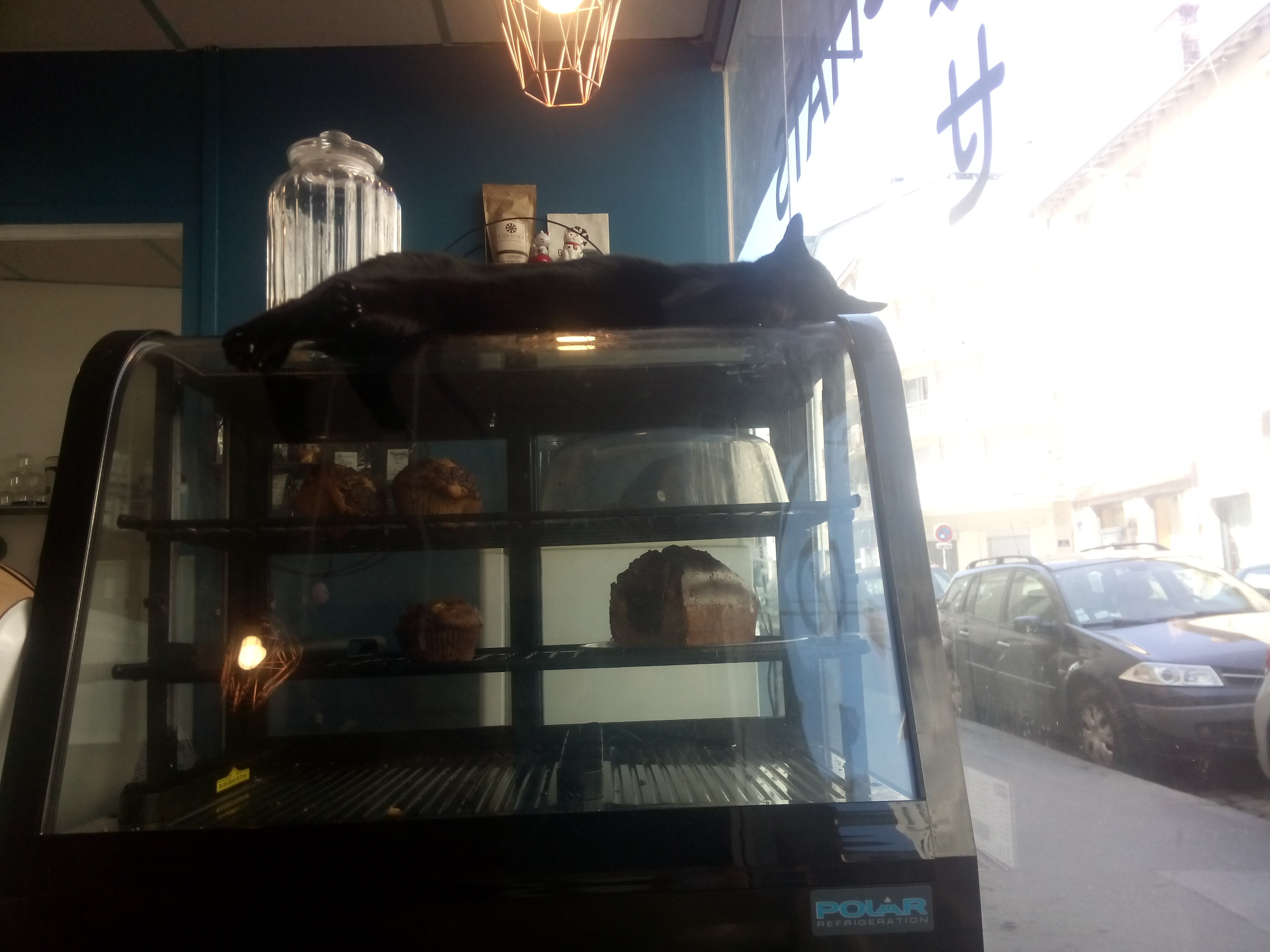 A glass cabinate of cakes with a black cat sprawled on top