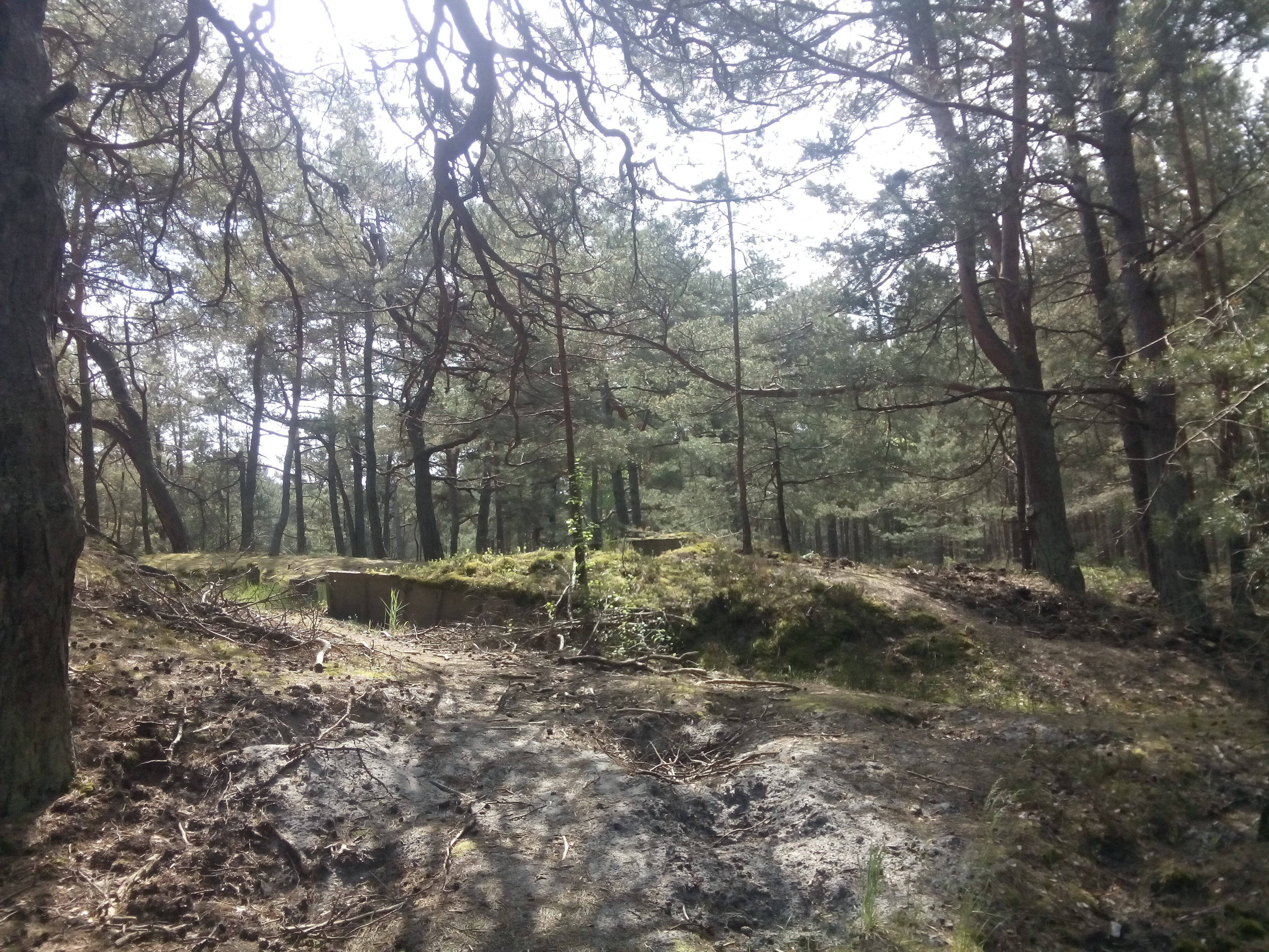 Trees, sand and moss covered bunker in the woods