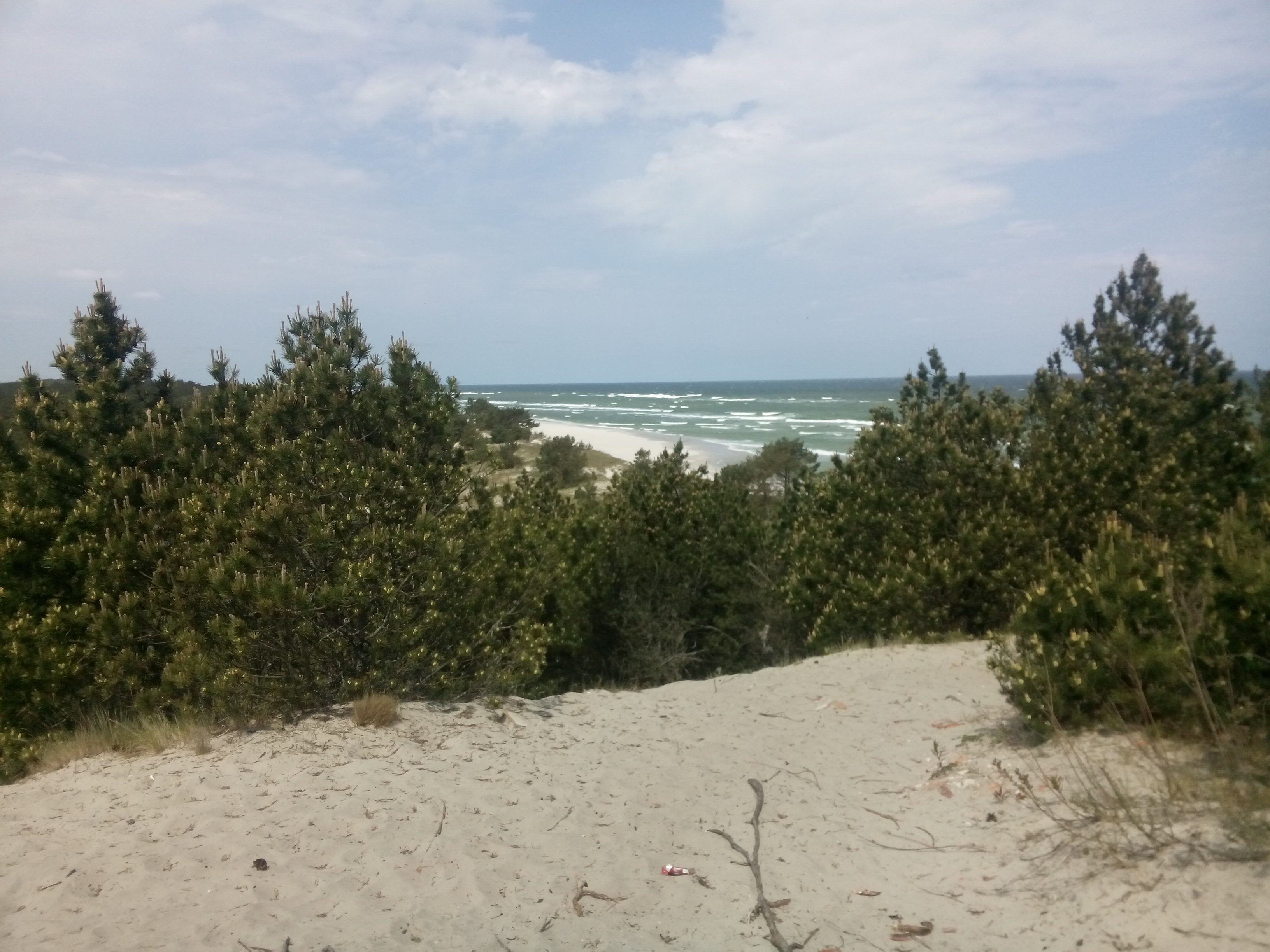 Dunes lined with trees and the sea in the background