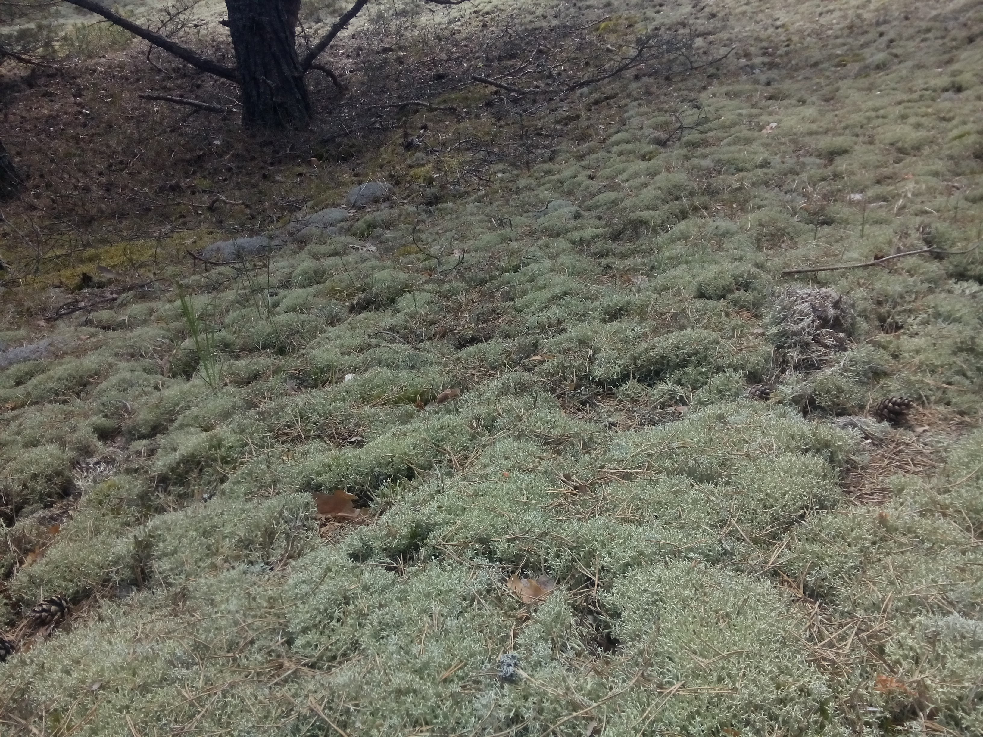 Light green moss on the forest floor with a tree trunk in the corner
