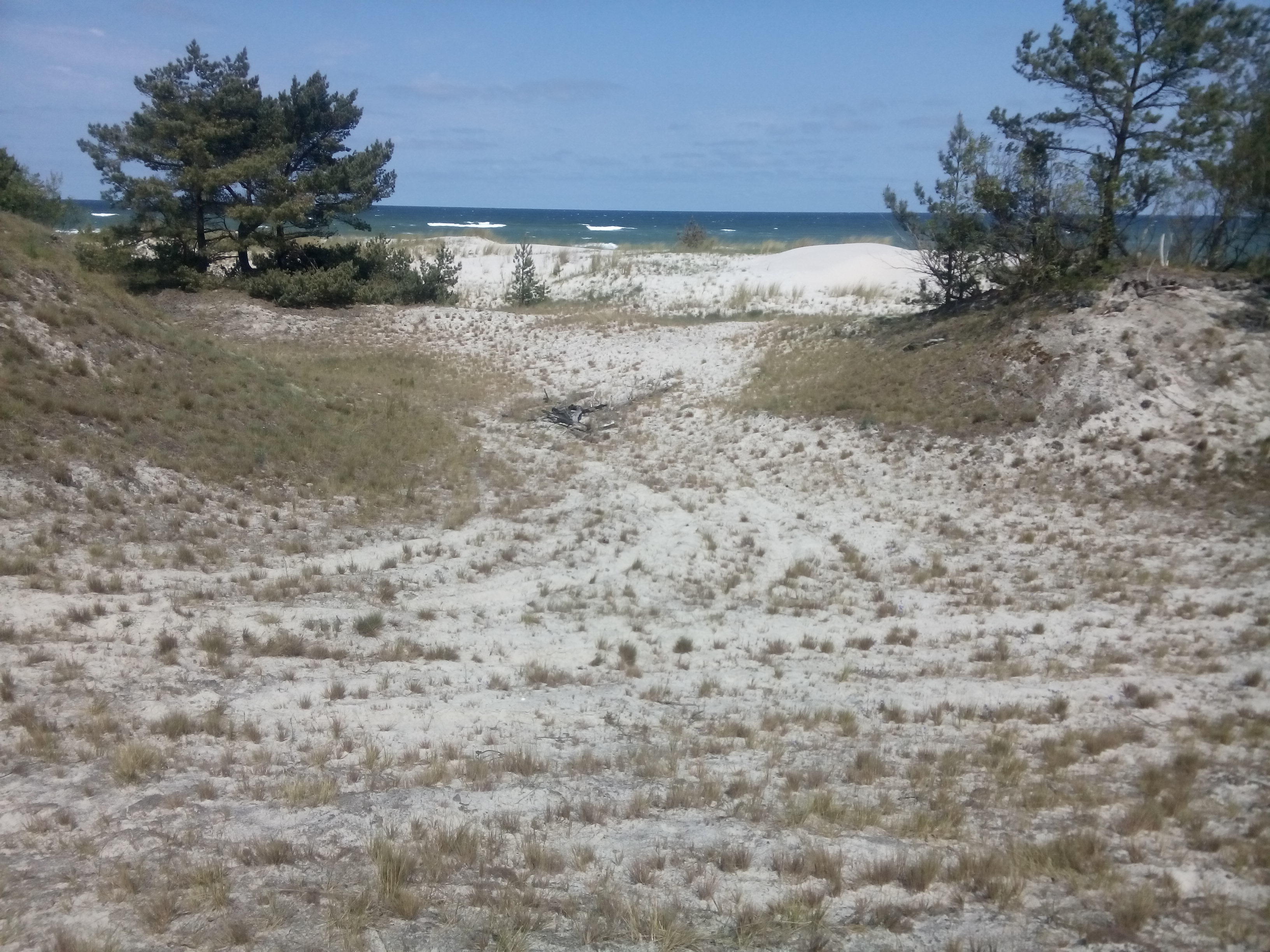 Grassy dunes with sea on the horizon