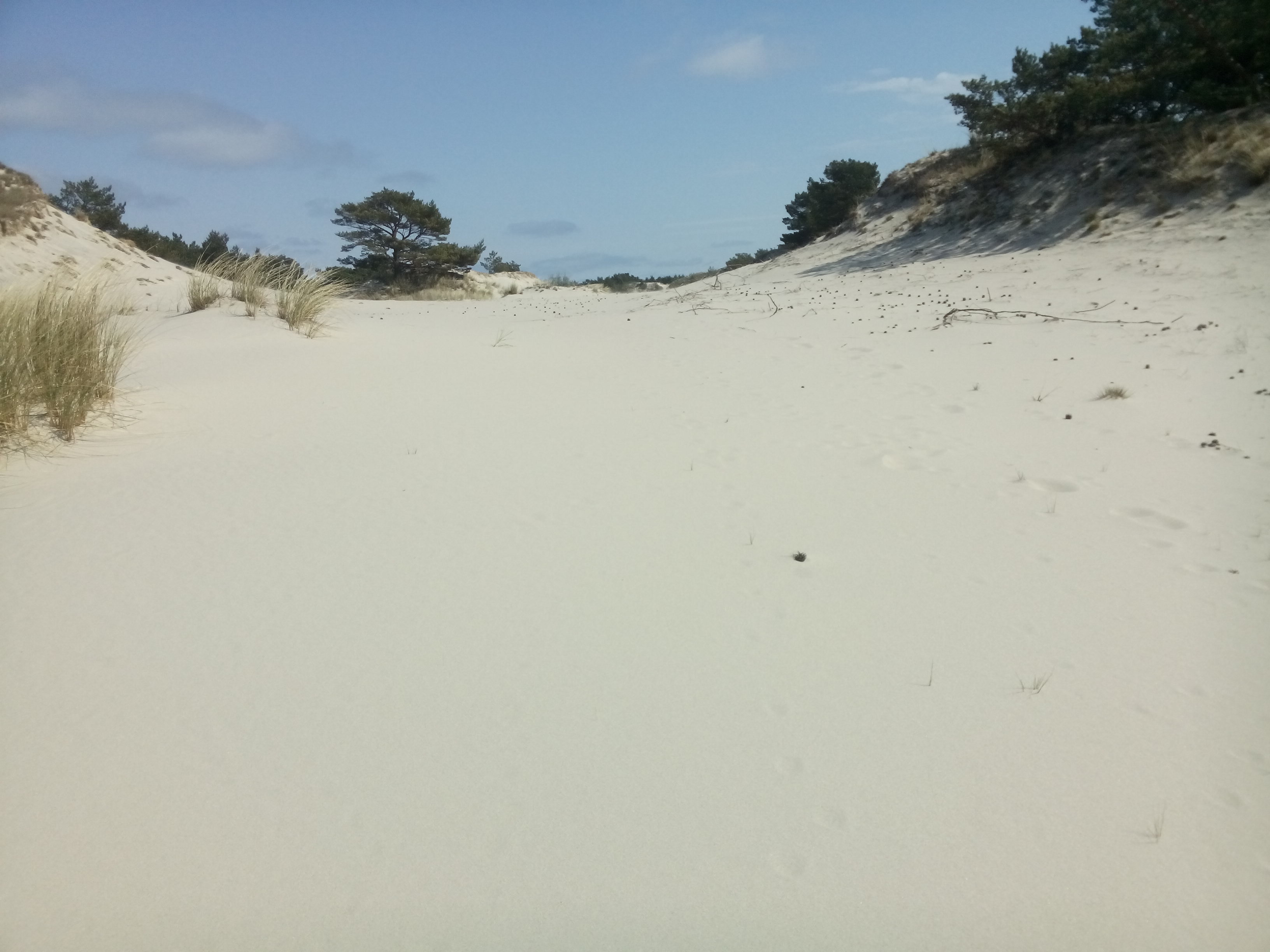 Most of the picture is smooth white sand stretching to the horizon, with some trees and blue sky