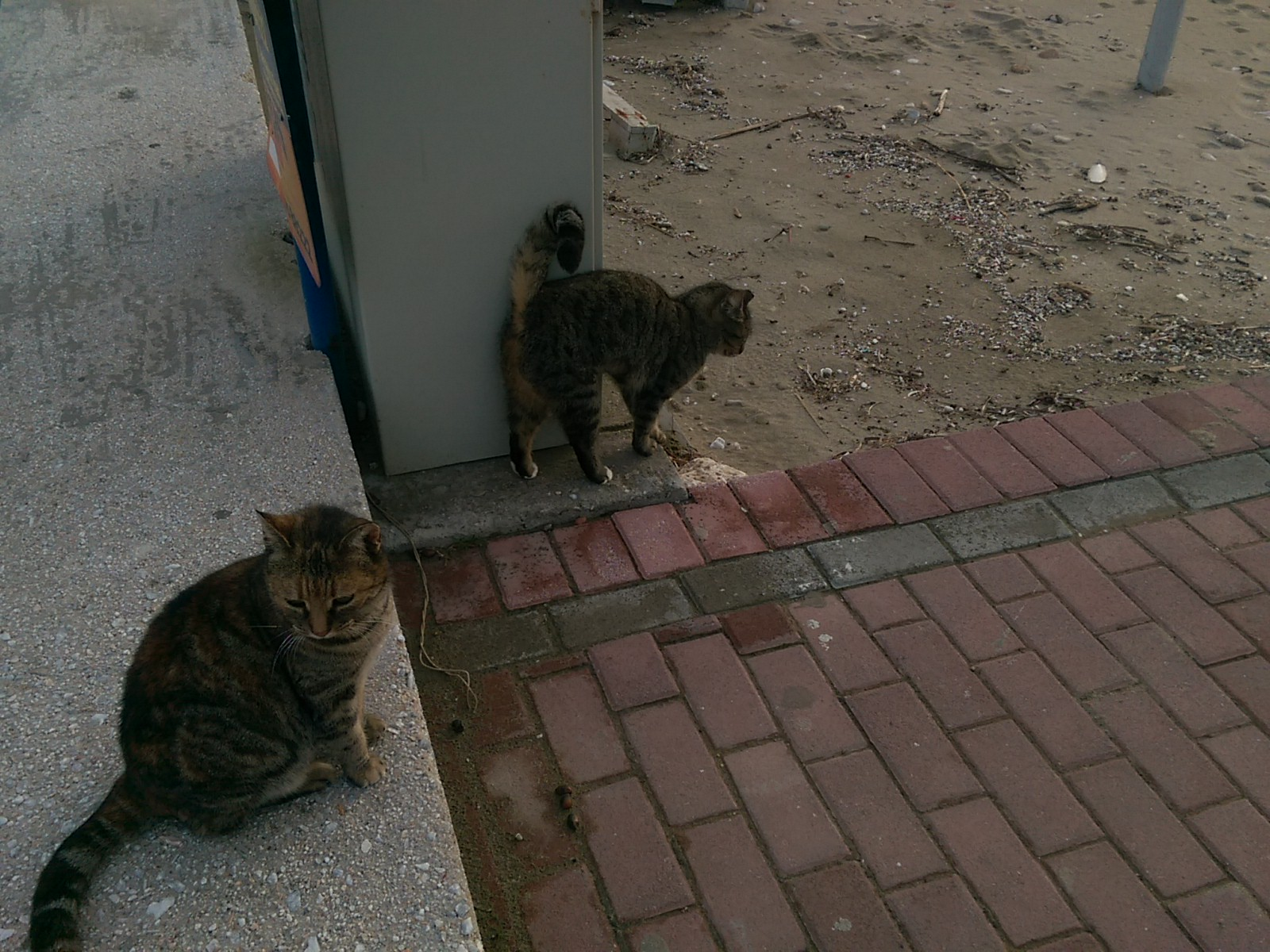 Two tabby cats hanging out on sand and pavement