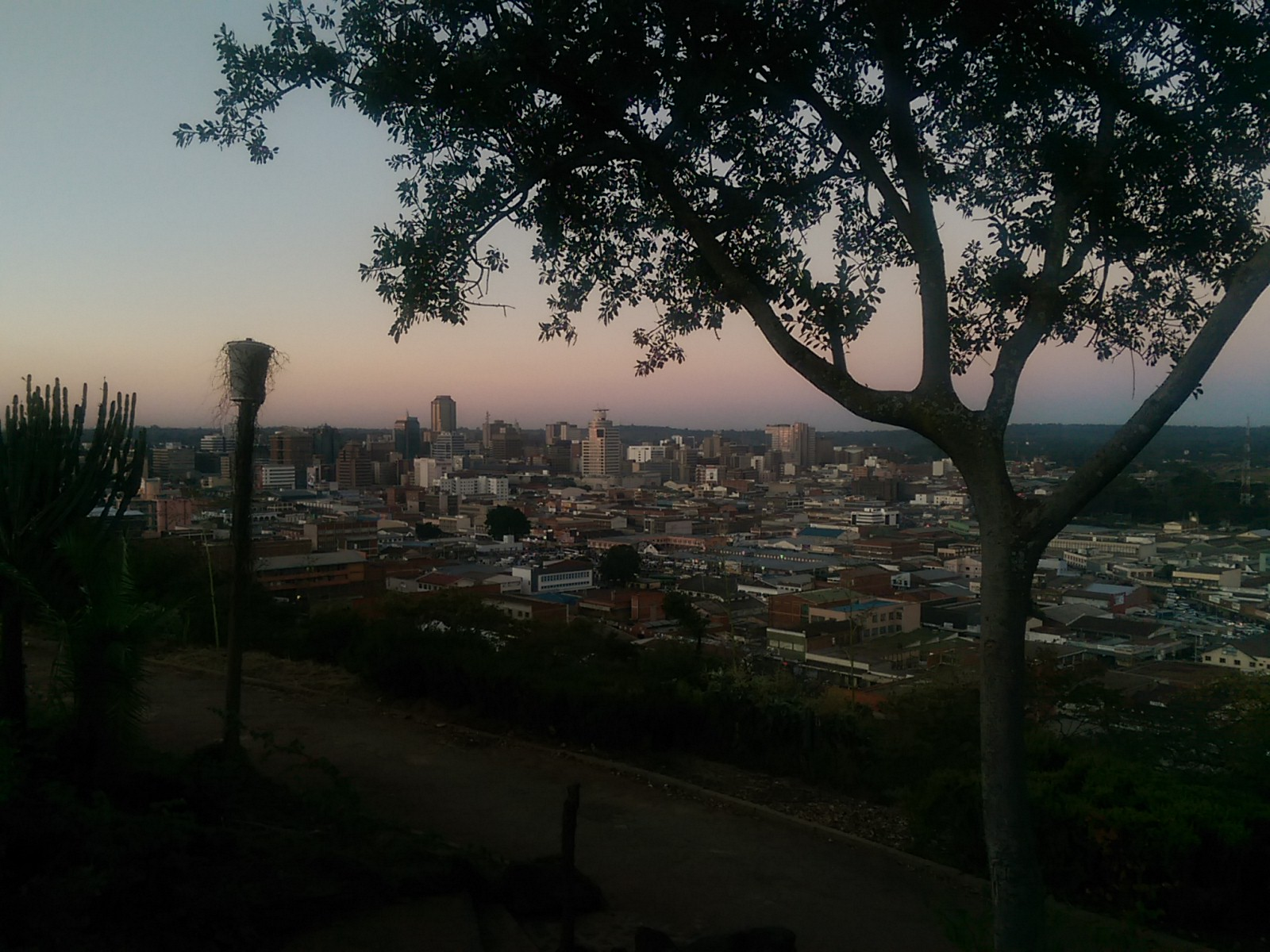 A tree in the foreground of a city scape with a gentle pink and blue dusk sky
