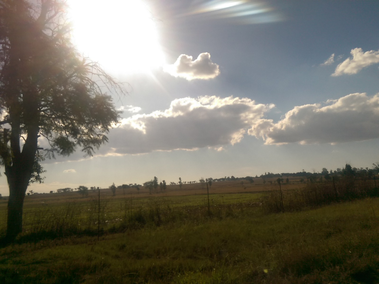 Scrubby green and yellow fields, a tree on the left, blue sky with some fluffy white clouds and a glaring sun blaze in the upper left