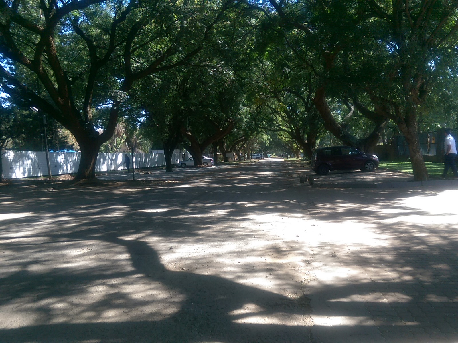 A wide road with trees at the edge and mottled branch shadows across the ground