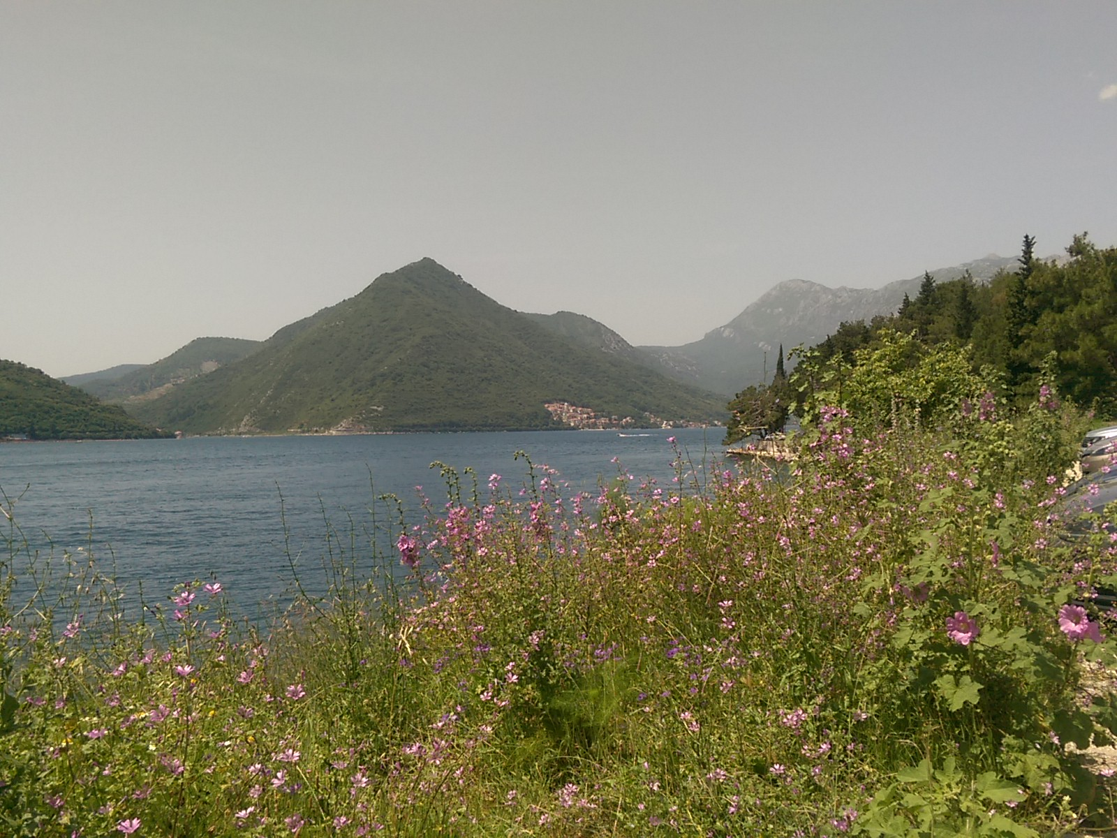 Fluffy green leaves with pink flowers backed by the blue sea and pointy green distant hills