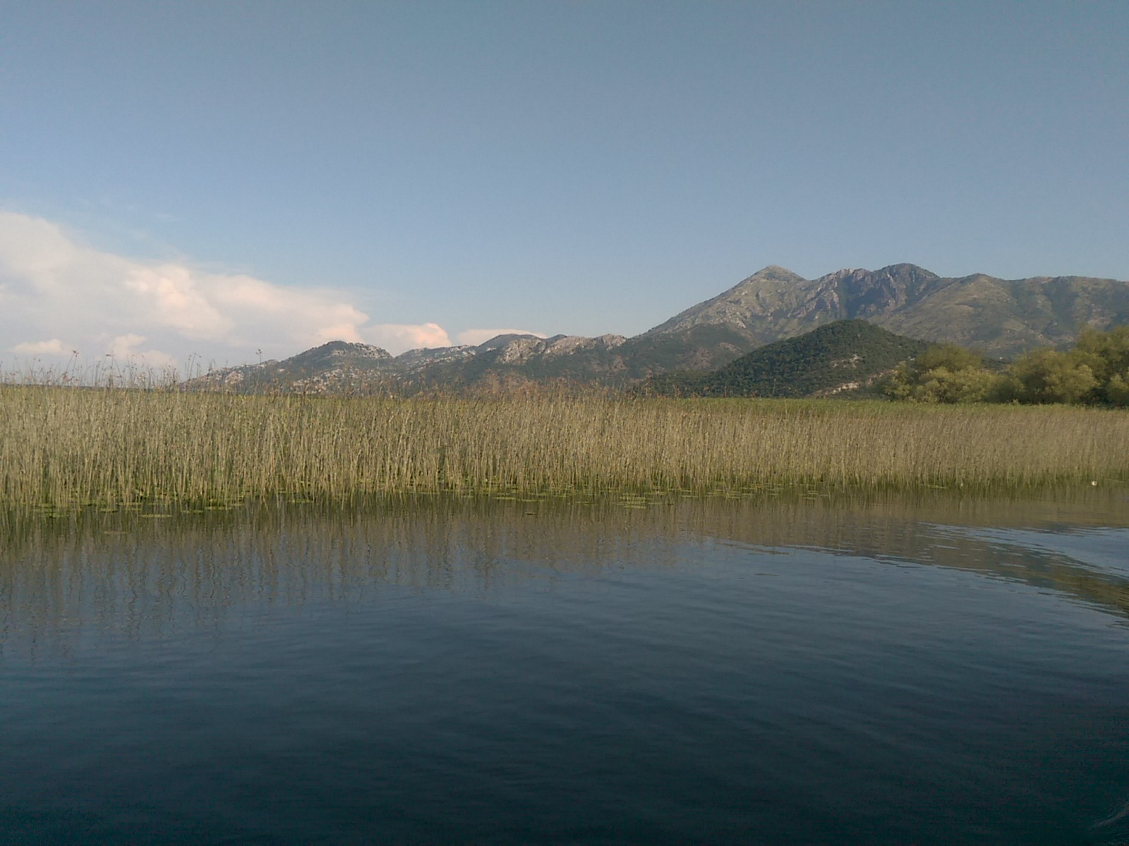 Smooth lake water with reeds growing out and mountains in the background