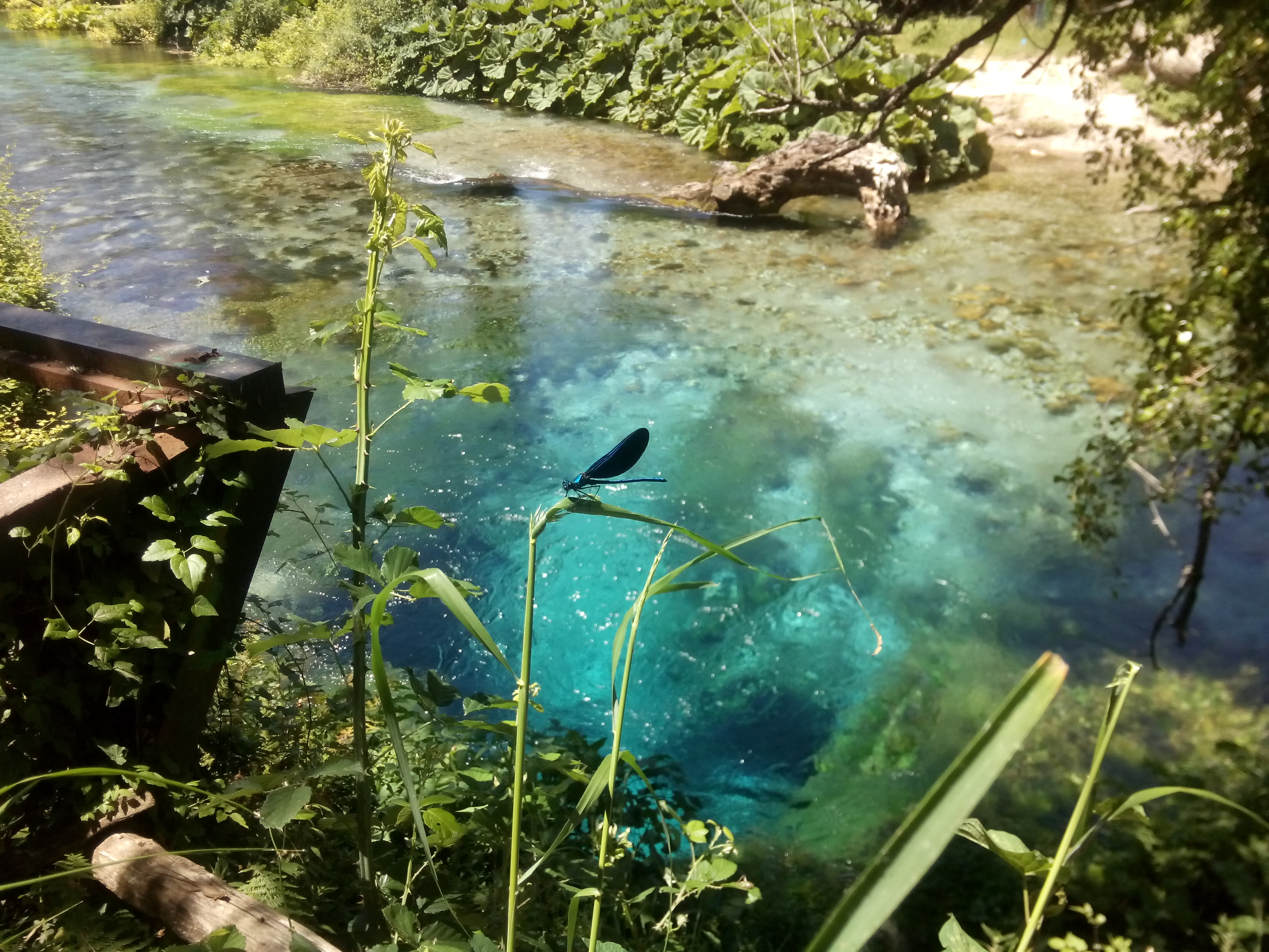 A glowing blue pool framed by trees and leaves with a brilliant blue dragonfly perched in the foreground