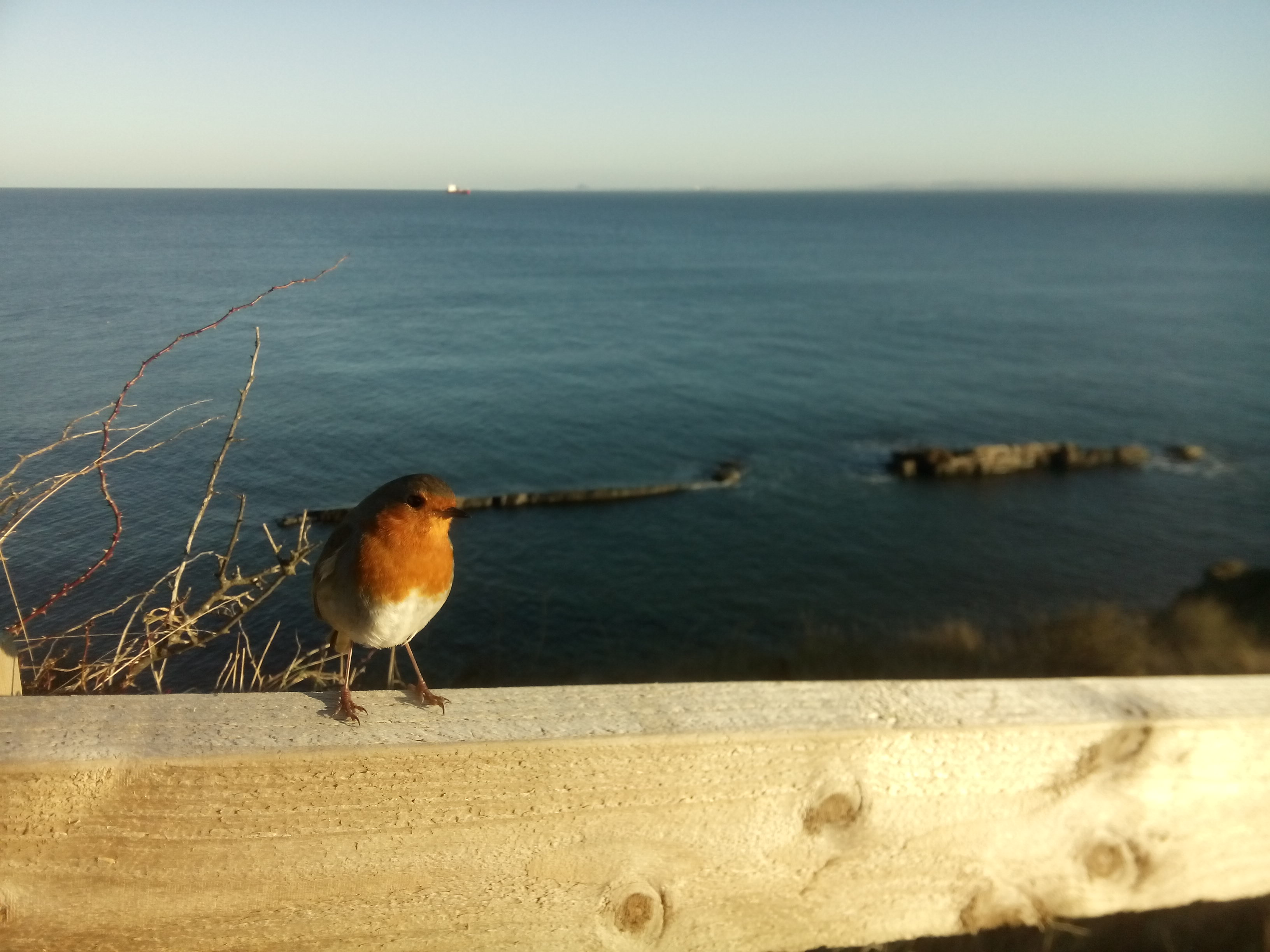A small robin redbreast perched on a wooden fence, with clear blue sea and sky in the background