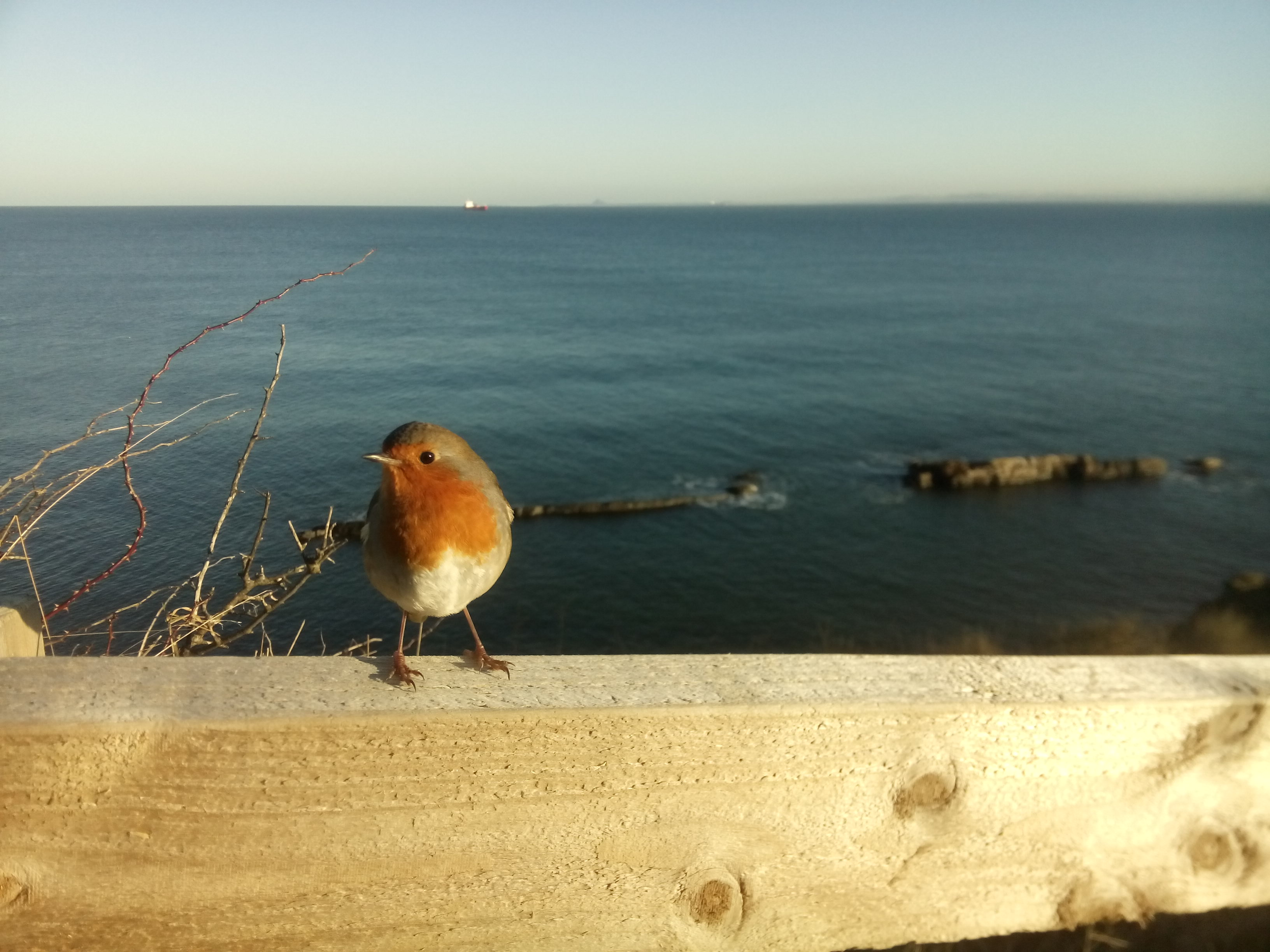 The small robin is happy we came by and hopes we have a joyous day